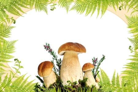 Mushroom and fern border Stok Fotoğraf