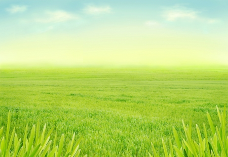 Meadow with fresh green grass Stok Fotoğraf