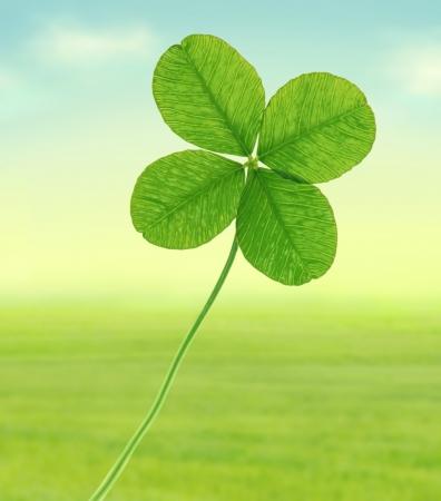 quarter foil: Green four leaf clover, illustration  Stock Photo