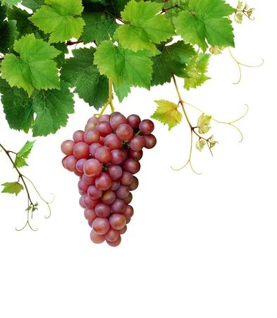 Pink grape and grapevine Stok Fotoğraf