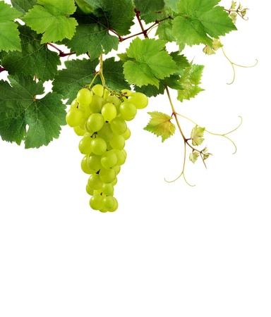 tip of the leaf: Fresh grapevine and grape