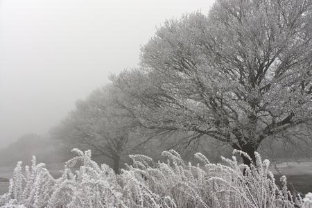 Misty & frosty morning in Newlands Corner, Guildford