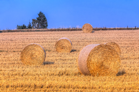 Hay bale in the harvest time