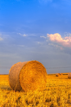 harvest time: Haye bale in the harvest time