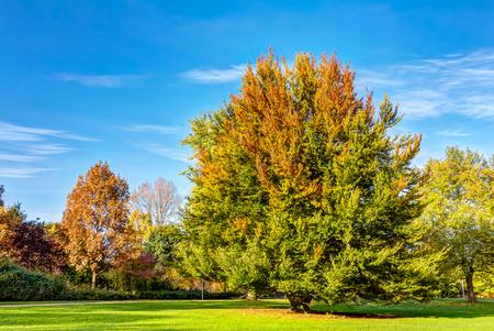 hamburg: Autumn in the Planten und Blomen park of Hamburg Stock Photo