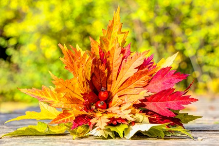 hardwoods: Colorful autumn leaves lovely arranged in a bunch