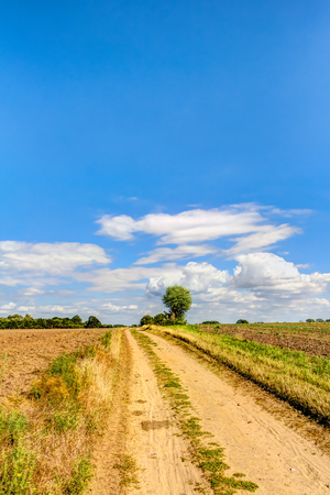 Way in summer through a agricultural field in Germany Stock Photo