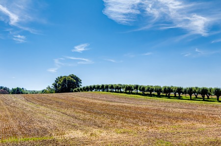 agricultural area: Agricultural area in summer with blue sky and white clouds in Germany Stock Photo