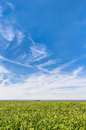 Agricultural area in summer with blue sky and white clouds in Germany Stock Photo