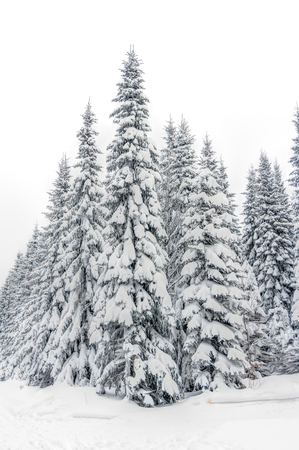 erzgebirge: Landscape of snowy mountains in the highlands near Altenberg, Saxony in Germany