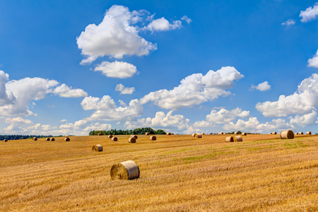 Straw bales at harvest time with blue sky and white clouds