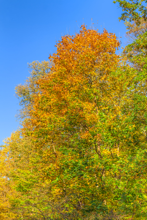 Colorful leafes in an autumn forest scenery Reklamní fotografie