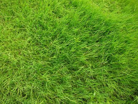 green grass field close-up Stock Photo