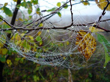 web with many small dew drops macro photo