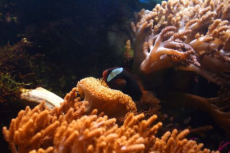 tropical aquarium with corals 2 Stock Photo - 2190329