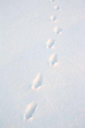 animal tracks: tracce degli animali sulla neve nel campo  Archivio Fotografico