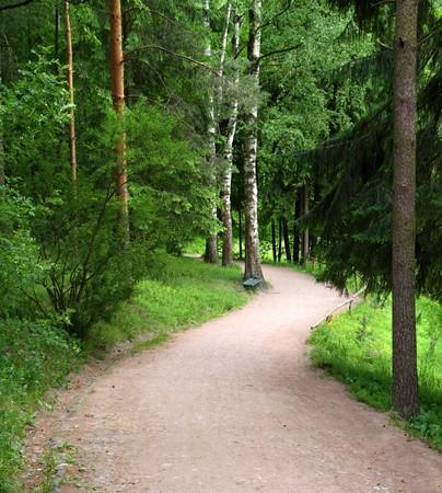 curved road in Pavlovsk park Saint-Petersburg Russia photo