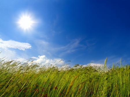 blow: erba verde sotto il cielo e il vento che soffia Archivio Fotografico