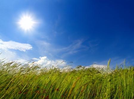 viento soplando: hierba verde bajo el cielo y el viento que sopla