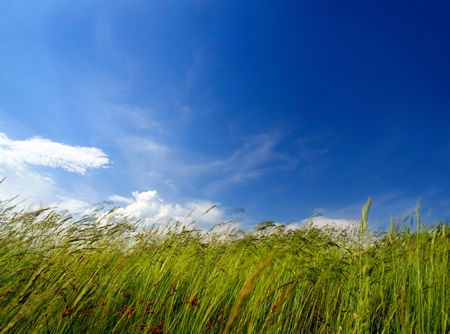 green grass under sky and wind blowing photo