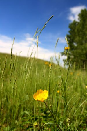 summer landscape with buttercup under hill Stock Photo - 5263387