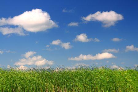 green grass under blue sky background Stock Photo - 5303536