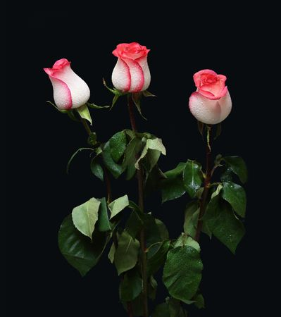 bouquet of three rose on black background photo