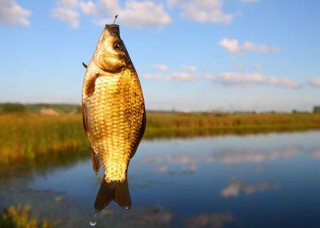 fishing - catching crucian on lake background photo