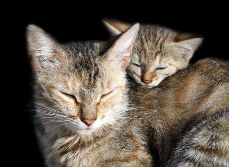 hijos: los gatos durmiendo - madre e hijos aislados en negro Foto de archivo