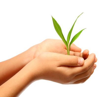 green plant in children hands isolated on white