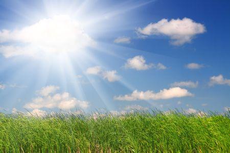 green grass under blue sky background Stock Photo - 5998332