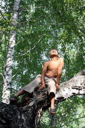 happy boy looking up on birch tree Stock Photo - 6605229