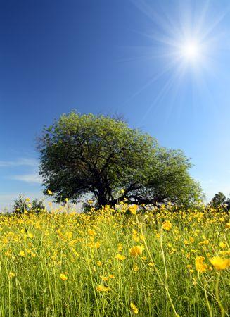 landscape with strange tree on buttercups meadow