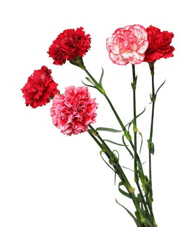 carnations: bouquet of carnation flowers isolated on white Stock Photo