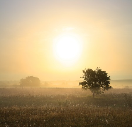 morning landscape with single tree in mist