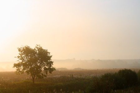 morning landscape with single tree in mist photo