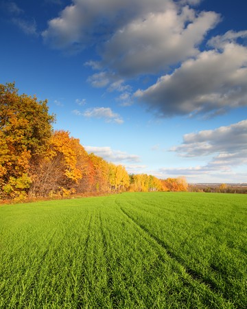 autumn landscape with green wheat field and yellow woods photo