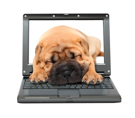 laptop with sleeping shar-pei puppy dog out of screen photo