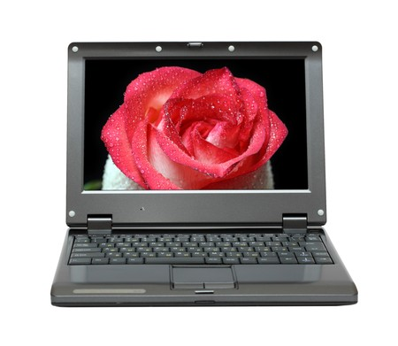 small laptop with red rose on screen photo