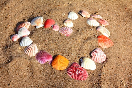 heart symbol from sea shells on sand beach photo