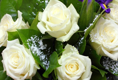 arrangment: close-up view on bouquet of white roses