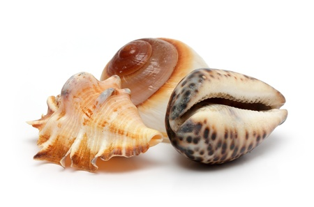 group of sea shells close-up on white photo