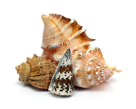 group of sea shells close-up on white