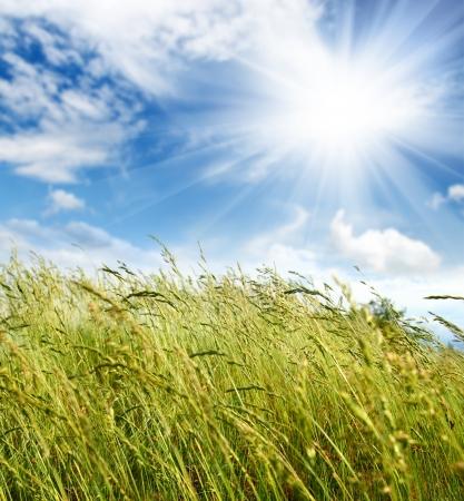 grünen Gras unter Himmel und Wind weht