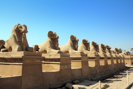 ancient egypt statues of sphinx in Luxor karnak temple