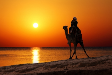 sahara desert: bedouin on camel silhouette against sunrise over sea