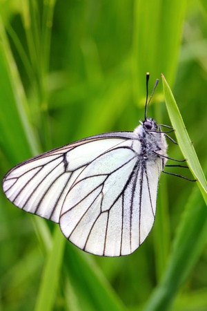 white butterfly on green grass - close-up view photo
