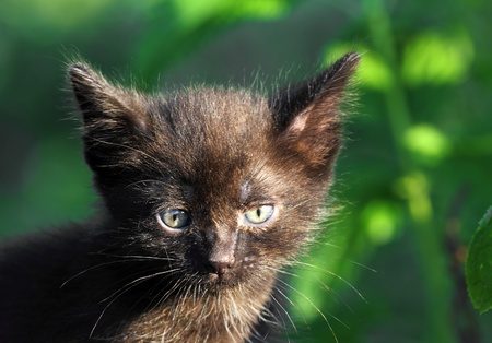 peu de noir chaton plein air portrait photo