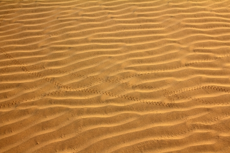 sand in desert with scarab footprints - background Stock Photo - 17190157