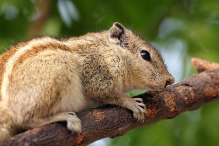 chipmunk sitting on tree branch closeup Stock Photo - 17721662